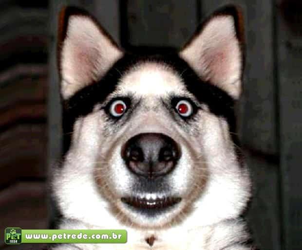 Seu cachorro sabe como usar um scanner?