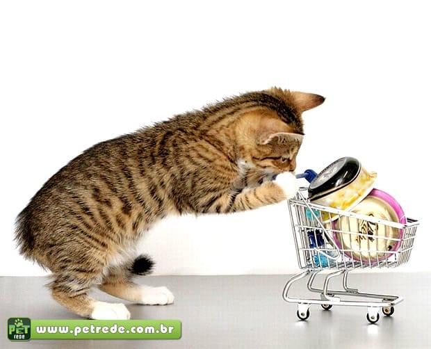Crescimento do mercado leva pet shops a reformularem conceito para atrair clientes