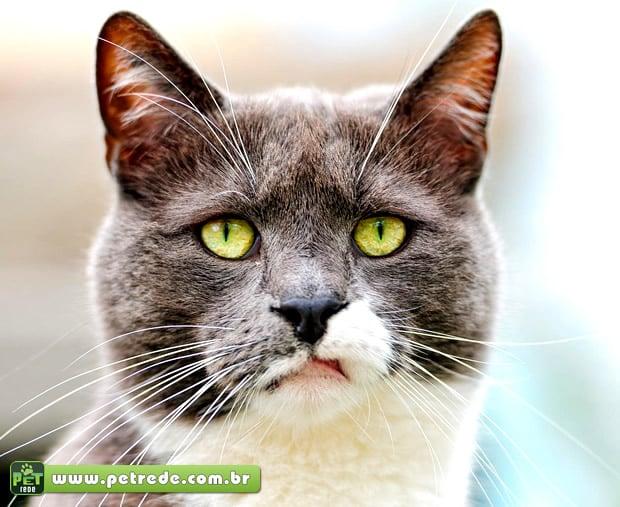 gato-surpreso-petrede