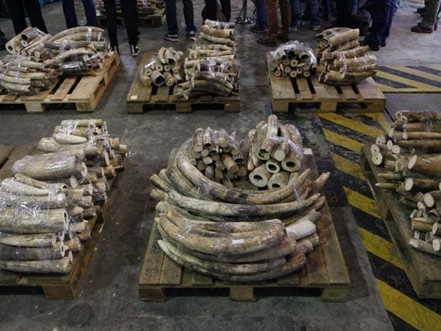 eBay acusado de ajudar na extinção de espécies