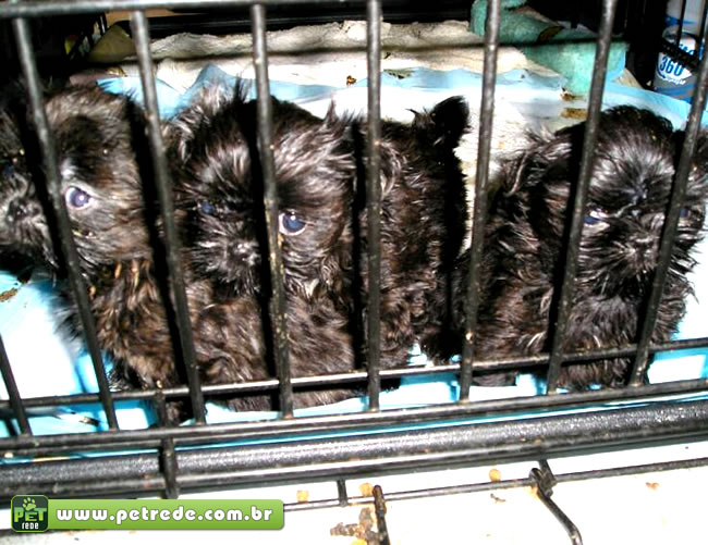 cachorro-filhote-enjaulado-gaiola-grade-preso-petrede