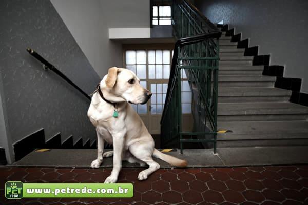 Animais em condomínios: regras específicas e campanhas educativas evitam brigas na Justiça