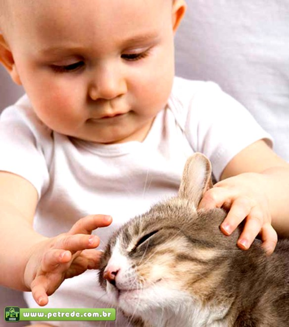 bebe-gato-carinho-crianca-petrede