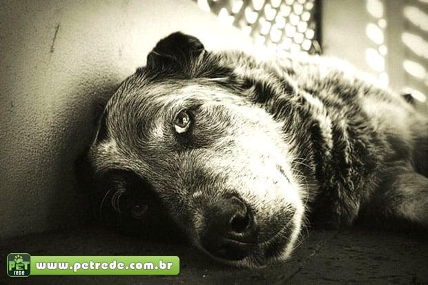 Abrigo para cães idosos será inaugurado no Japão