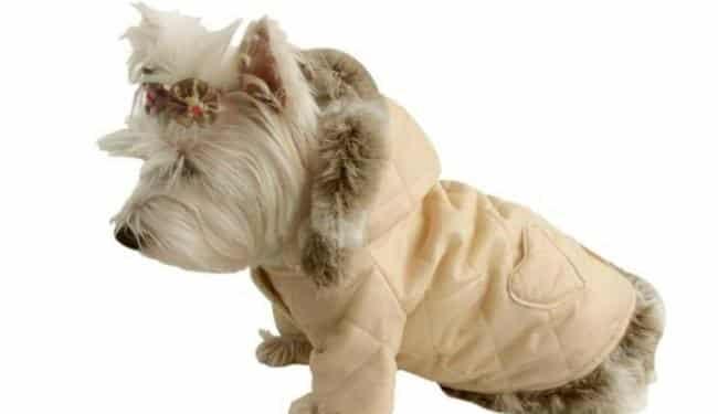Empresa brasileira produz roupa de luxo para cachorro