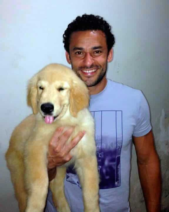 fred-fluminense-golden-retriever
