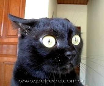 gato-surpreso-admirado-petrede