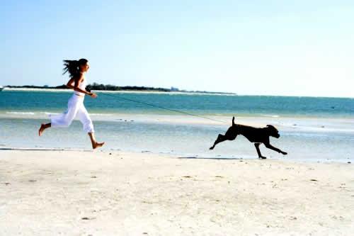 petrede-cachorro-exercicio-correndo