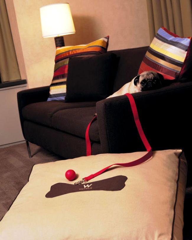 W-hotels-PAW-bed-cachorro-pug