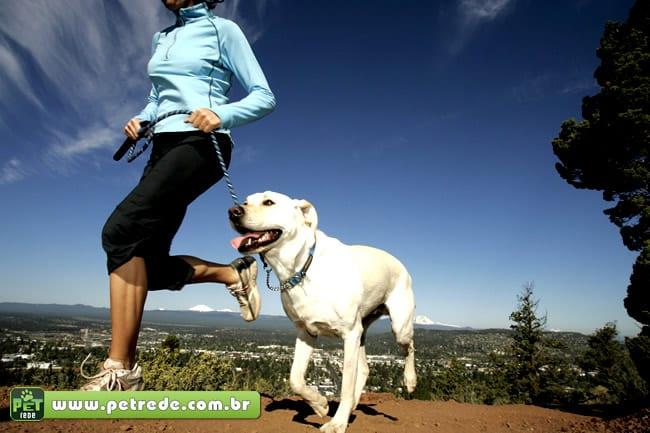 cachorro-labrador-exercicio-corrida-atividade-fisica-petrede