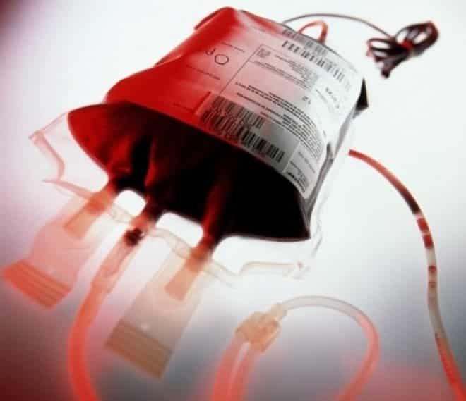 Animais também precisam de transfusão e podem doar sangue