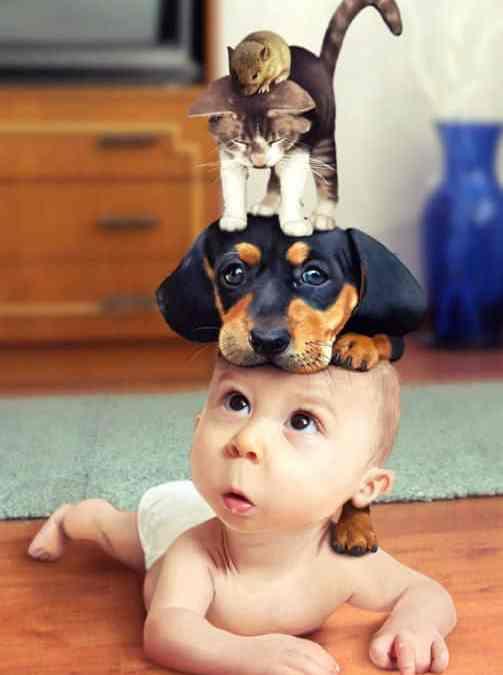 Pesquisa mostra que existem mais animais que crianças
