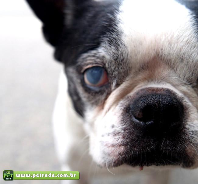 Meu cão está cego, o que fazer?