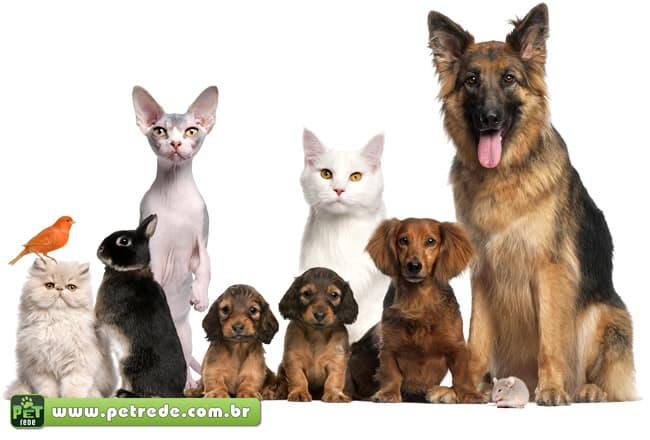 Como escolher um animal de estimação