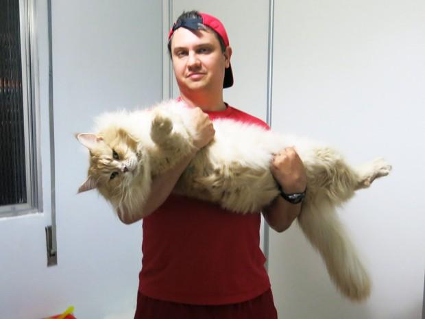 Por hobby, casal mantém 14 gatos 'gigantes' em apartamento de Santos