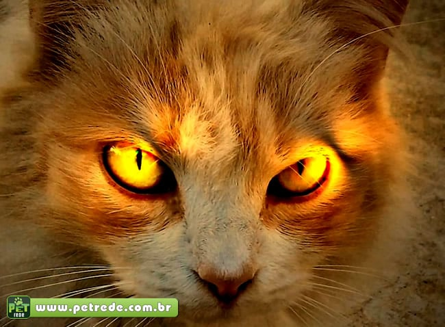 gato-olhar-mal-bravo-nervoso-petrede