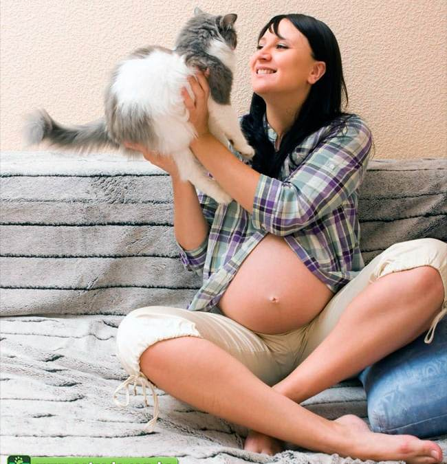Toxoplasmose: a culpa não é do gato!