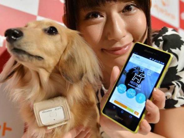 Operadora cria serviço para monitorar cães pelo celular
