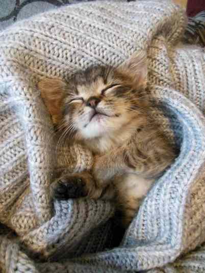 gato-inverno-frio-filhote-domrindo-descansar-petrede