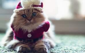 gato-inverno-frio-roupa-petrede