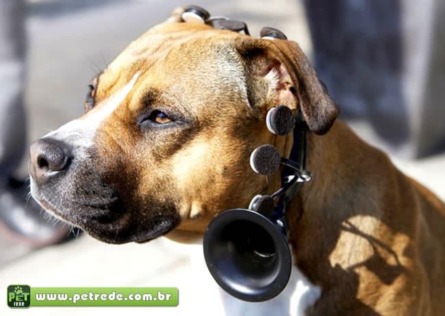 Cientistas desenvolvem dispositivo para traduzir os pensamentos dos cães