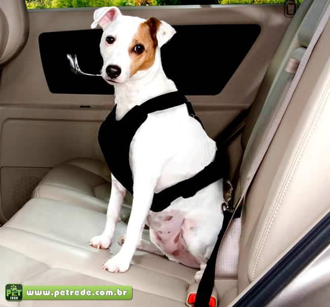 cachorro-automovel-carro-cinto-seguranca-passeio-transporte-coleira-petrede