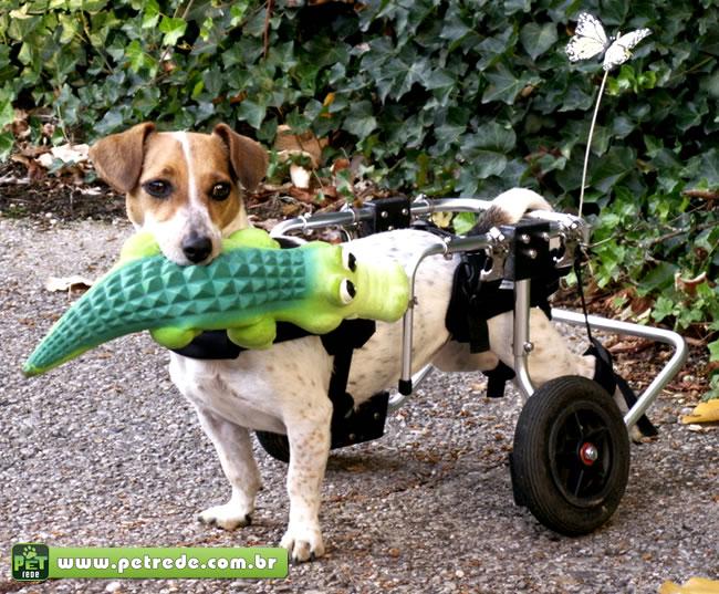 Afeto e companheirismo marcam o convívio de animais com deficiências e seus donos