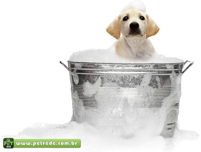 cachorro-filhote-labrador-banho-limpeza-higiene-sabao-espuma-petrede