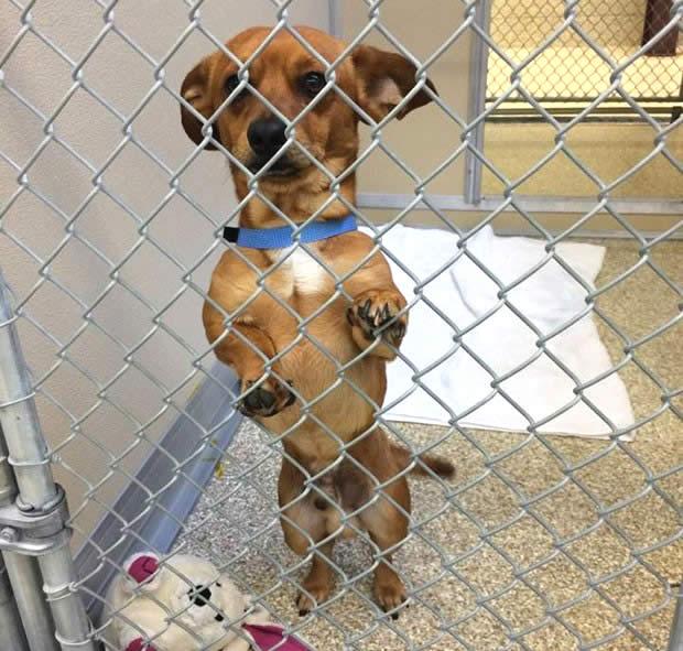 Cão sumido no Texas é encontrado a mais de 1.500 km em outro estado