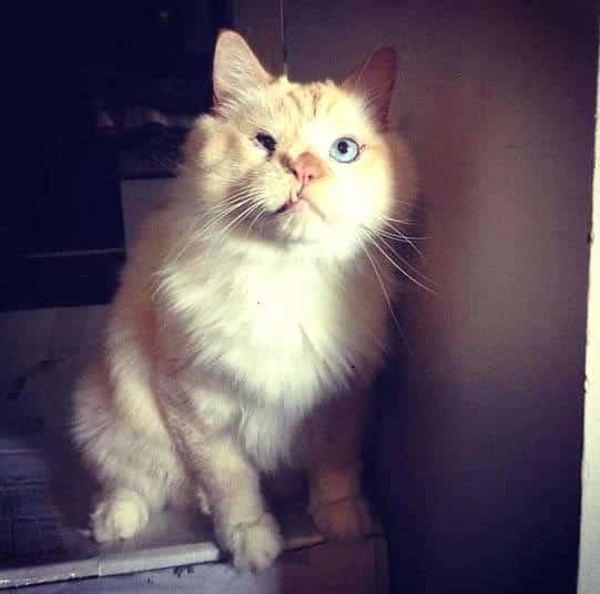 Com focinho deformado, gato é rejeitado e vira sensação nas redes sociais