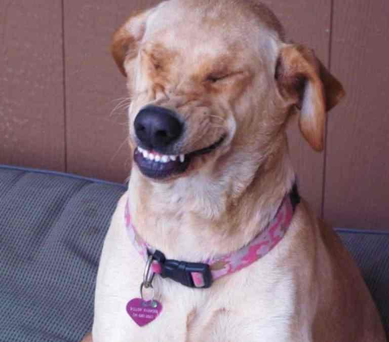 Rir com seu cão pode aliviar o estresse dos animais