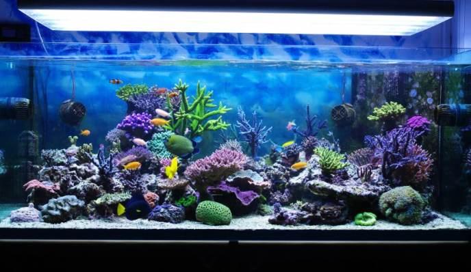 aquario-peixes-petrede