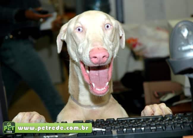 cachorro-espanto-pasmo-boca-aberta-louco-maluco-incrivel-petrede