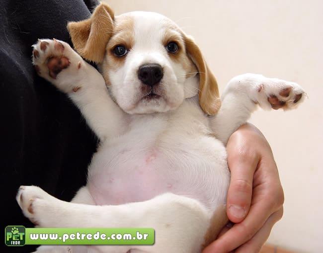 cachorro-filhote-colo-abraco-carinho-cuidado-petrede