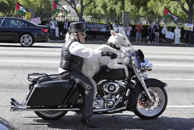 Dentro da lei, aposentado anda de moto com cachorro a bordo nos EUA