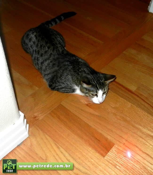 gato-laser-brincadeira-petrede