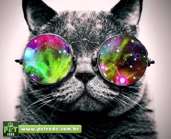 Concurso de beleza reúne gatos de toda a Europa na Romênia