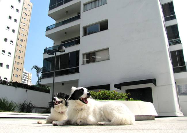 petsemstress-cachorros-em-condomínio