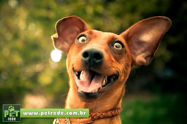 Já viu um cachorrinho quase explodir de felicidade?