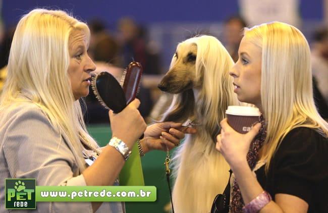 cachorro-humano-aparencia-pelos-cabelo-petrede