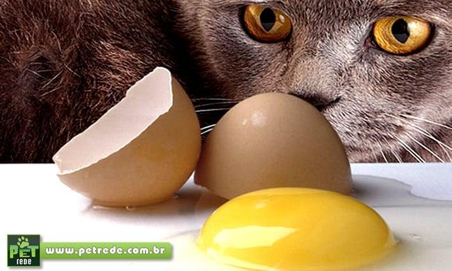 Gato pode comer ovo?