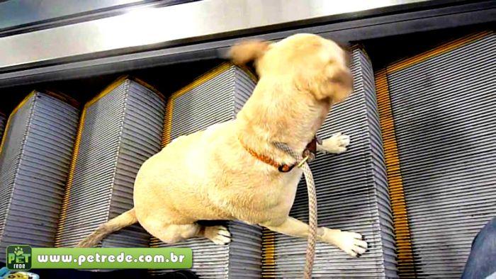 Saiba como transportar animais de estimação em elevadores, escadas e esteiras rolantes de maneira correta