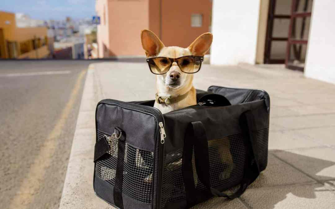 Viagem com seu pet