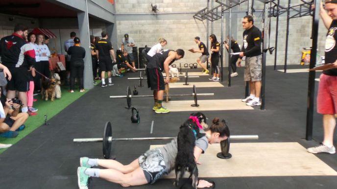 Hills-Pet-Nutrition-praticar-atividades-físicas-petrede