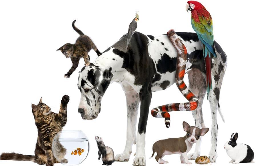 Mais de 100 animais são apreendidos em apartamento nos EUA