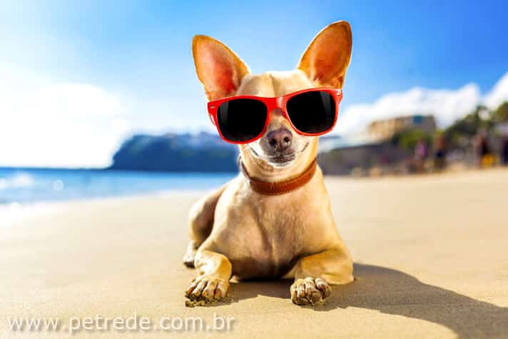 cachorro-calor-oculos-sol-ferias-viagem-sono-praia-piscina-verao-petrede