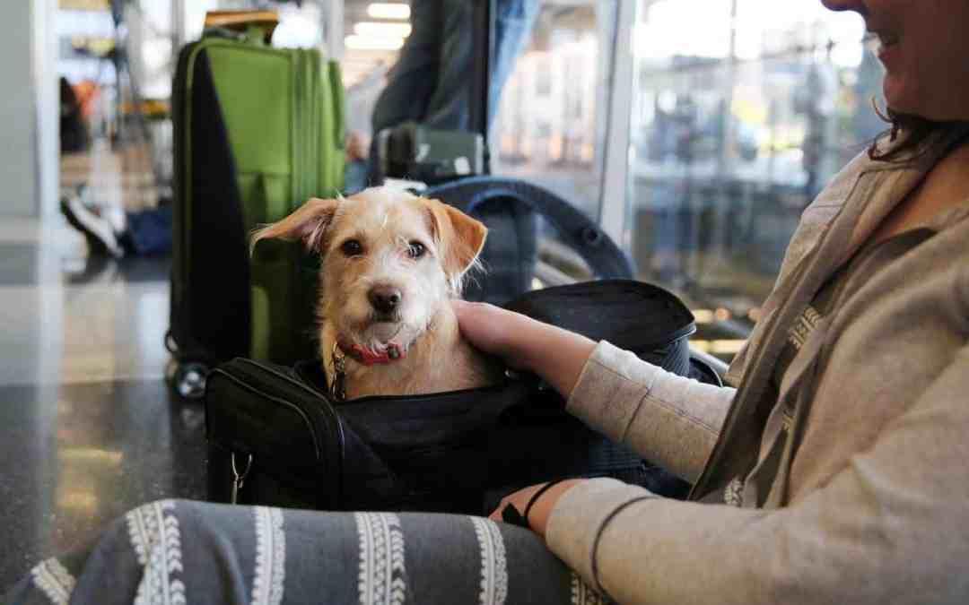 Vai viajar? Veja os cuidados necessários com os pets nas férias