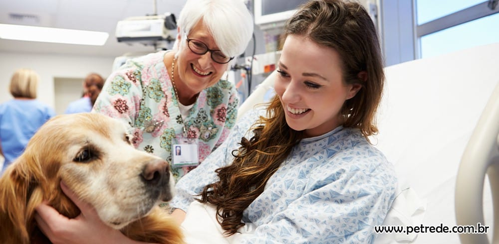 Cães terapeutas: veja como eles auxiliam a saúde e o bem-estar