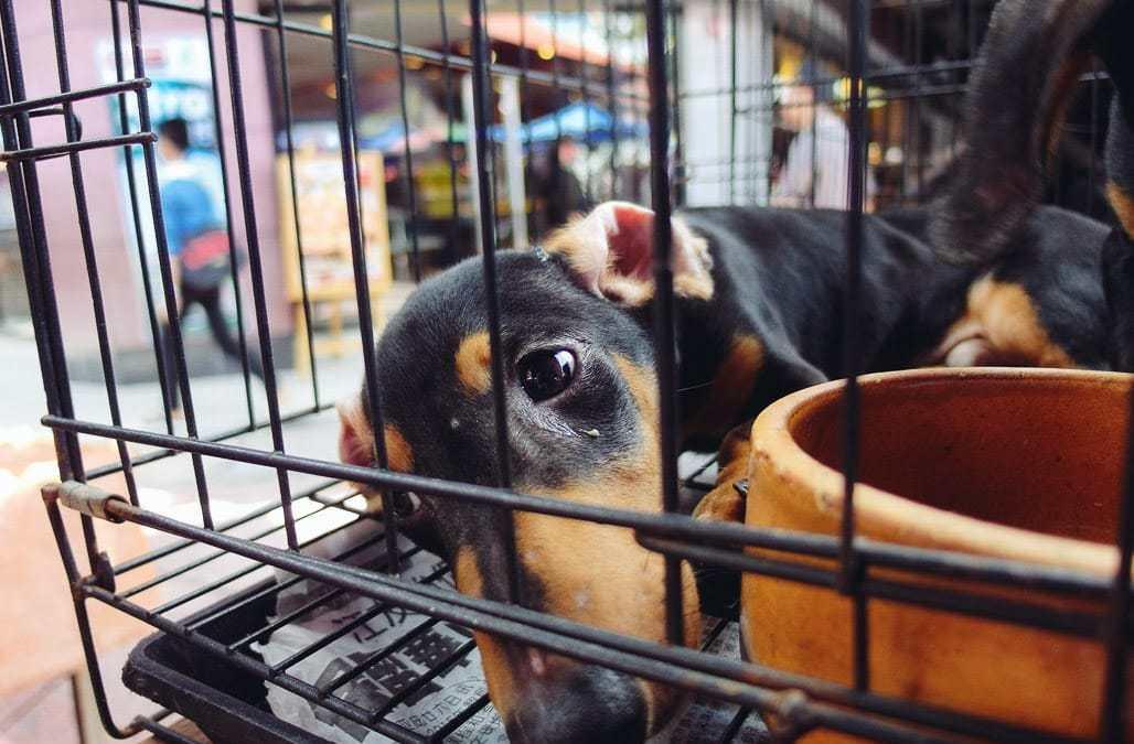 Doação de animais em feiras será proibida