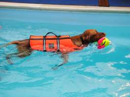 Swimming for dogs